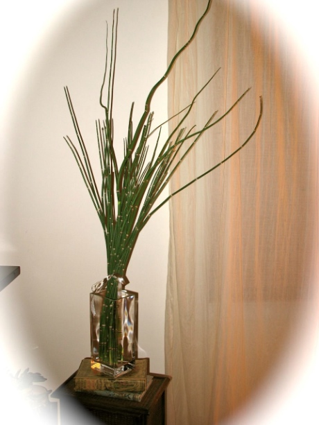 Free Natural Decor - Barred Horsetail