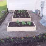 Benefits and Tips for a Vegetable Garden