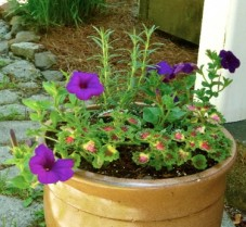 Creative Gardening [Repurpose and Save]