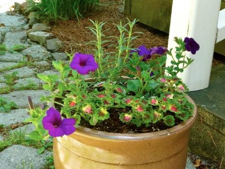 Creative Gardening 1