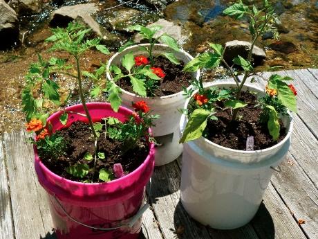 Creative Gardening 3