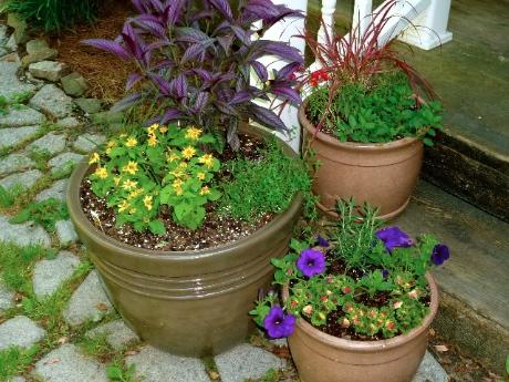 Creative Gardening 5