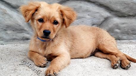 Raw Food Dog Diet