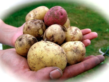 Bulgarian Potato Salad