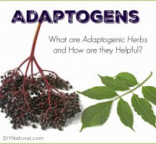 Adaptogenic Herbs: What They Are and A Helpful List