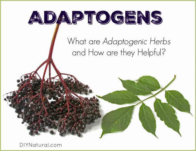 Adaptogens and Adaptogenic Herbs