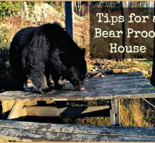 Tips on How to Bear-Proof Your House Naturally