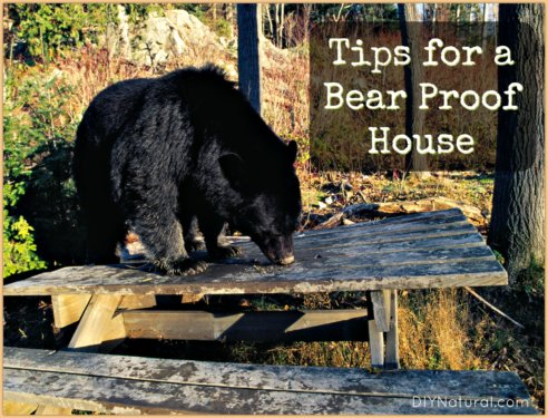 Bear Proof House