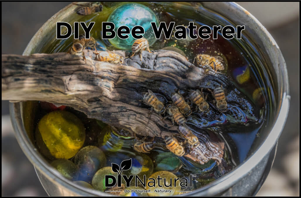 How to Make A Quick and Easy Bee Watering Station!
