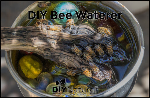 Bee Waterer Watering Station