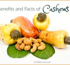 Health Benefits and Interesting Facts About the Cashew