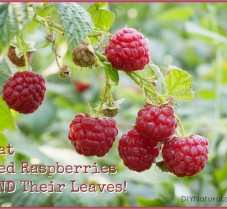 Red Raspberry Season & A Raspberry Risotto Recipe