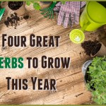 Four Must Grow Herbs For Your Garden This Year