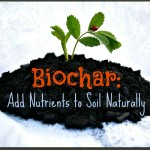 Biochar: Adding Nutrients To Your Soil Naturally
