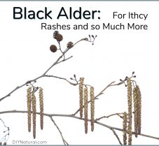 Black Alder for Itchy Rash Remedies and Much More