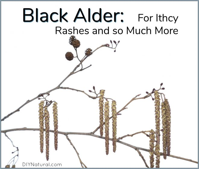 Black Elder Itchy Rash Remedies