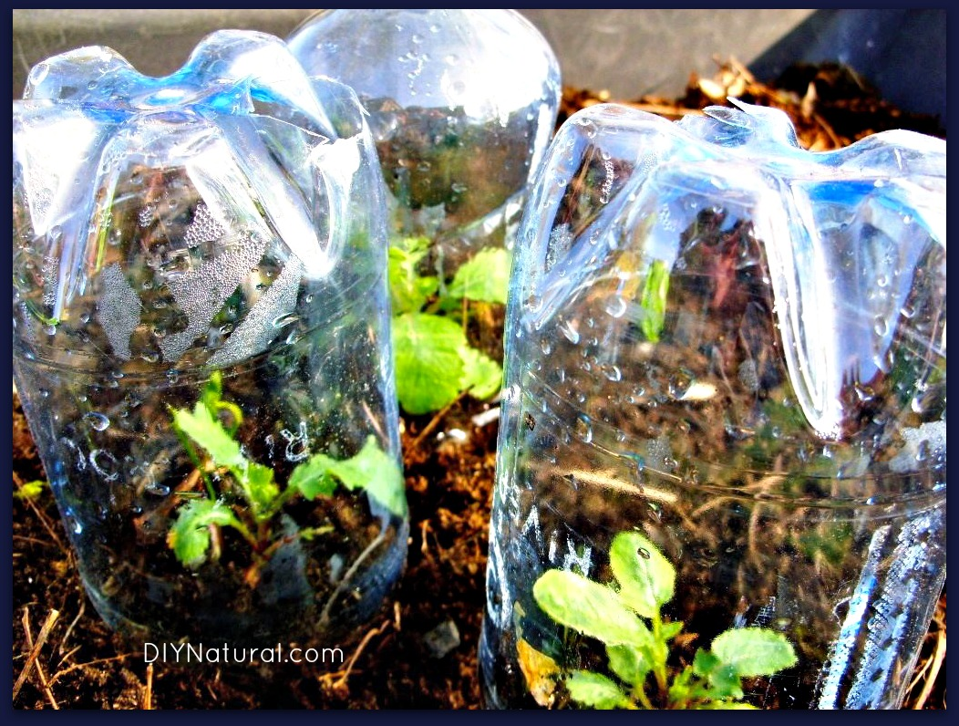 Bottle greenhouse and other creative diy greenhouse ideas for Creative ideas using plastic bottles