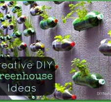 Creative and Resourceful DIY Greenhouse Ideas