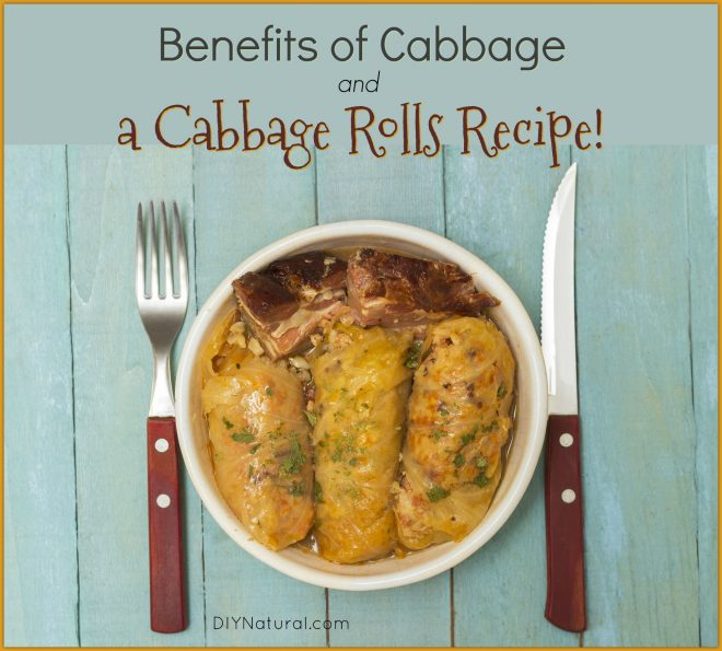 Cabbage Rolls Recipe Benefits