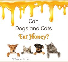 Can Dogs and Cats Eat Honey? What Are Some Uses?