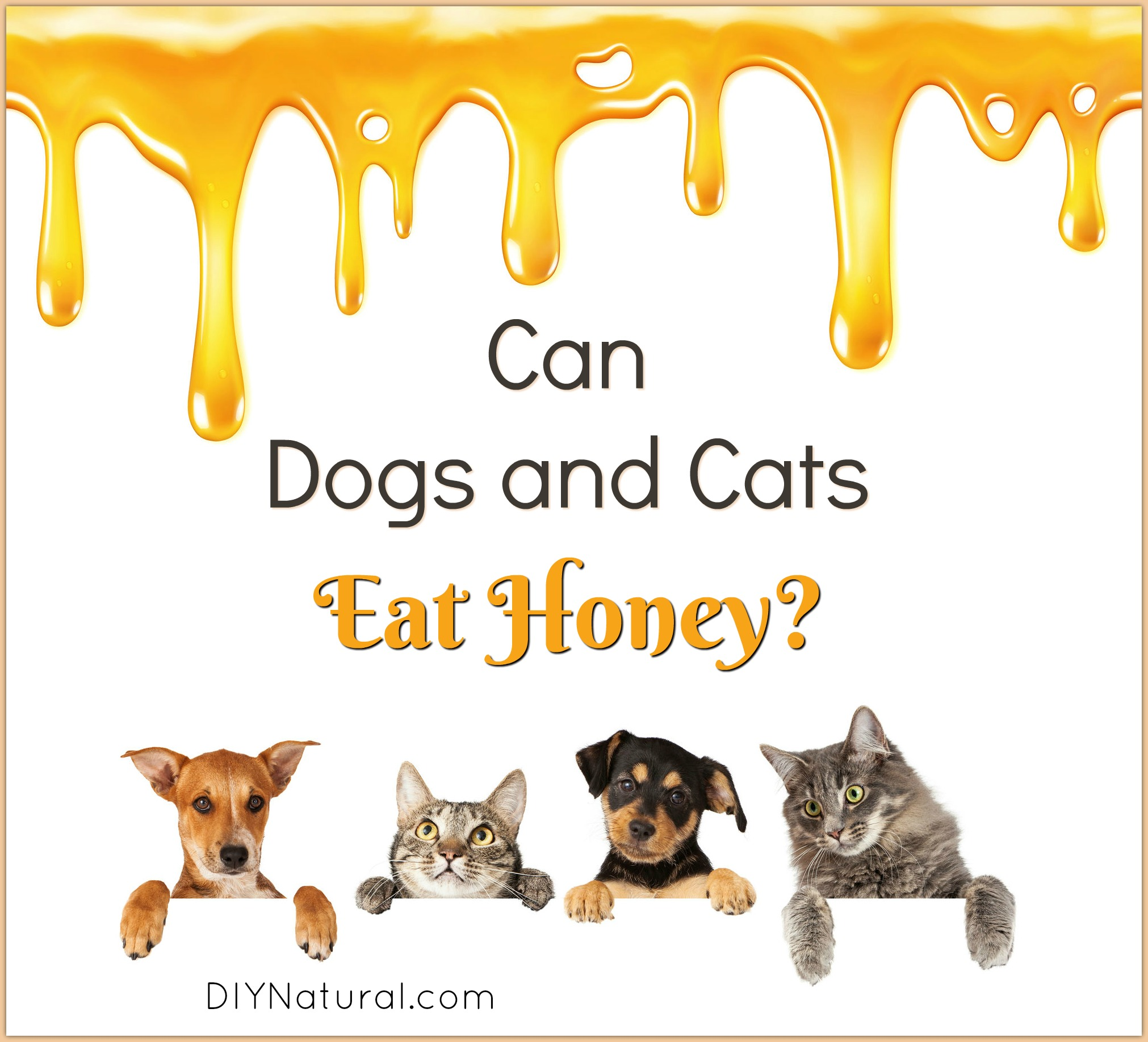 Can Dogs Have Honey For Cough