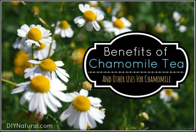 Chamomile Tea Benefit