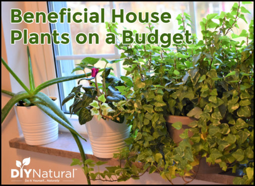 Cheap Indoor House Plants
