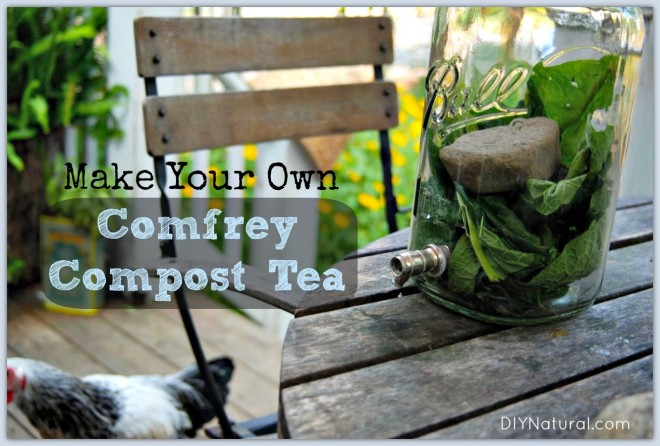 Comfrey Compost Tea Recipe