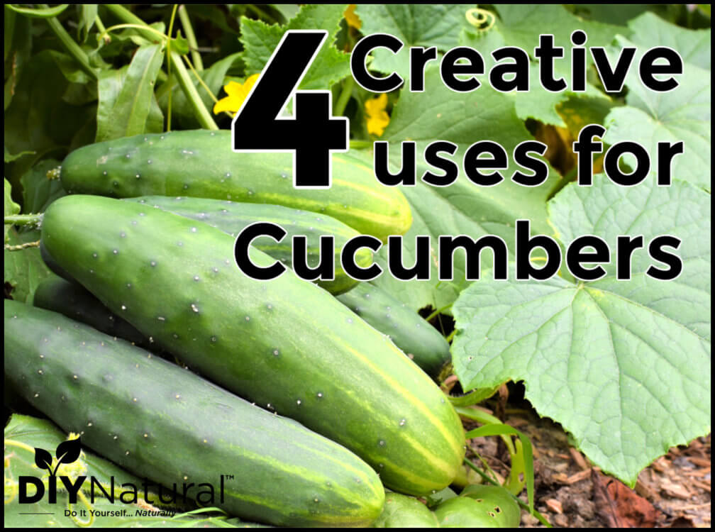 4 Creative Ways to Use A Bumper Crop of Cucumbers