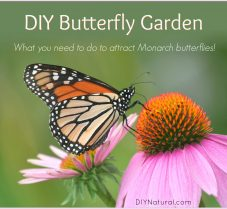 How to Make a Butterfly Garden to Attract Monarchs