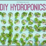 How to Set Up a Simple DIY Hydroponics System