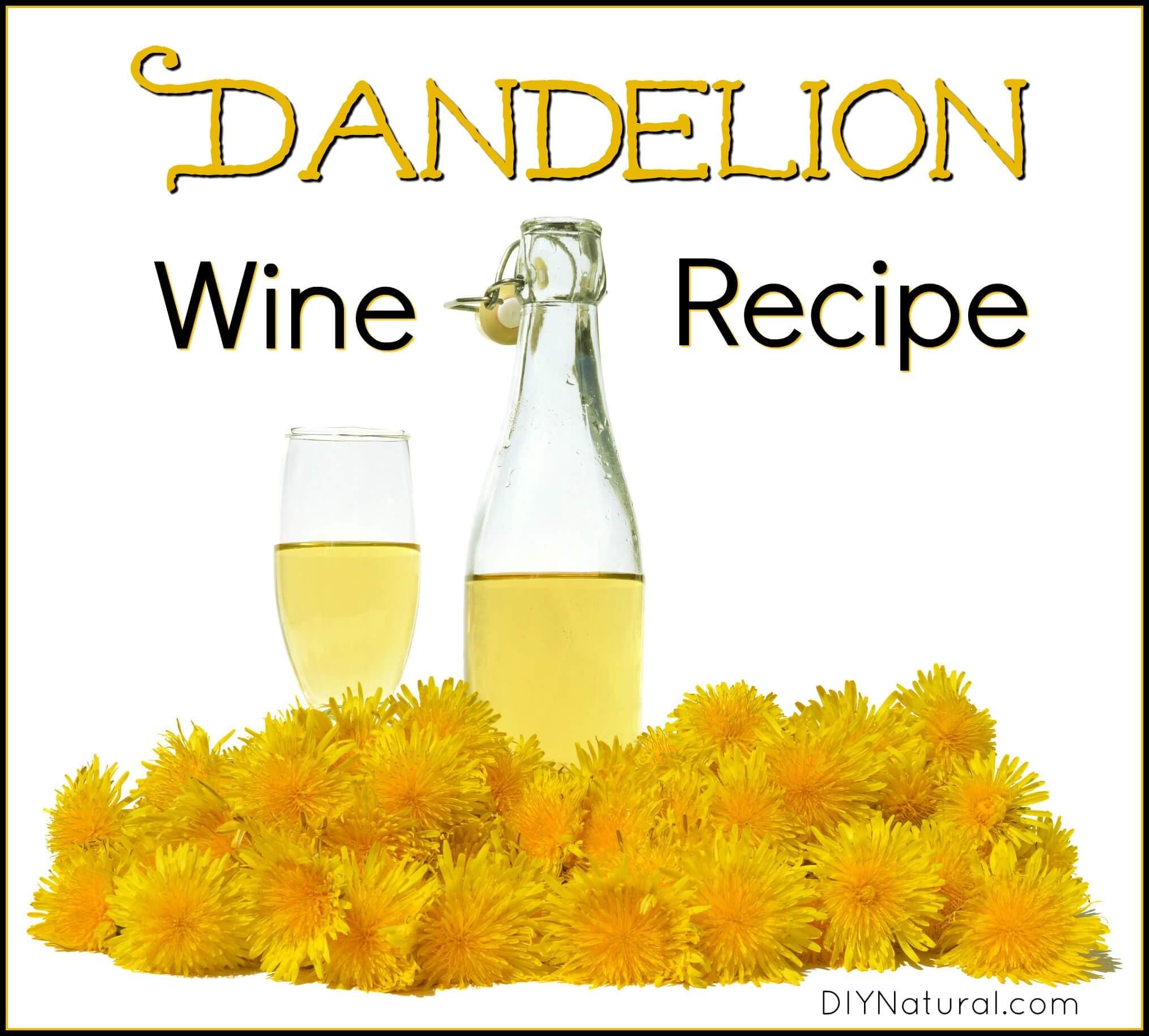 Wine from dandelions. Recipe for making homemade wine from dandelion flowers 25