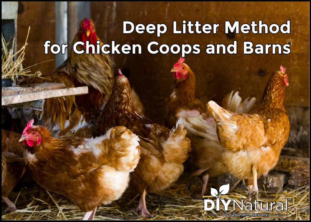 The Deep Litter Method for Clean and Warm Animals