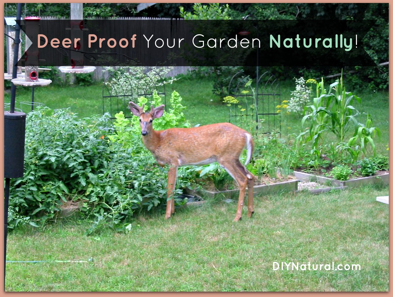deer proof your garden and yard naturally, Garden idea