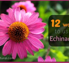 Benefits of Echinacea and 12 Ways To Use It