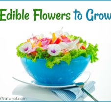 Grow These Flowers That are Beautiful AND Edible!