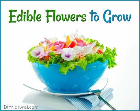 Edible Flowers Grow