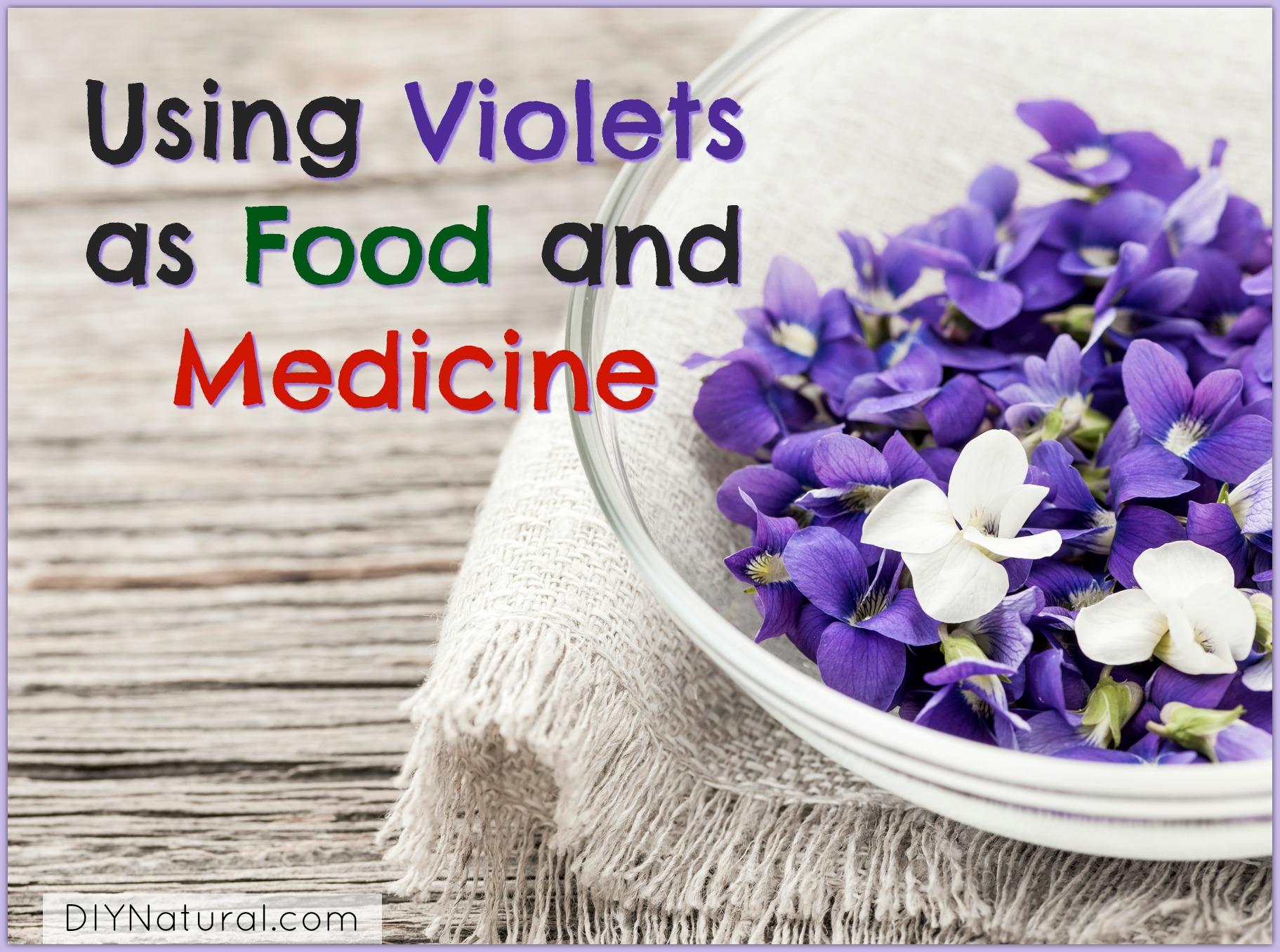 Edible Flowers Using Violets Viola Odorata As Food Medicine