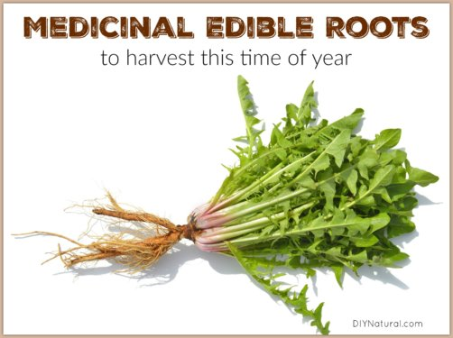 Edible Roots