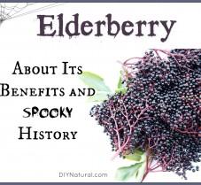 Elderberry Benefits and Its Spooky Halloween History