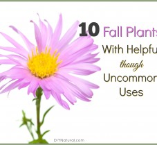 Fall Plants With Helpful Uses You Never Knew About