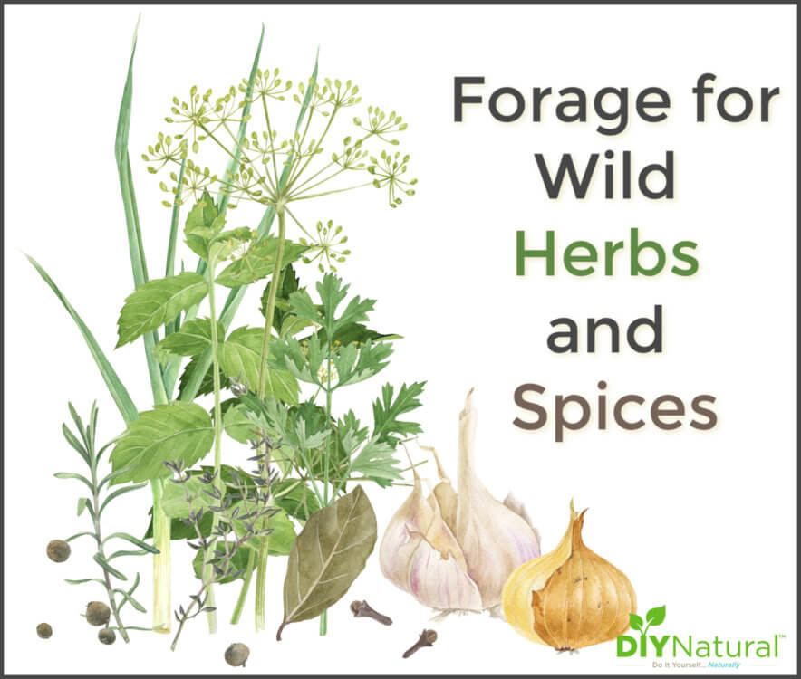 Forage for Wild Herbs and Spices