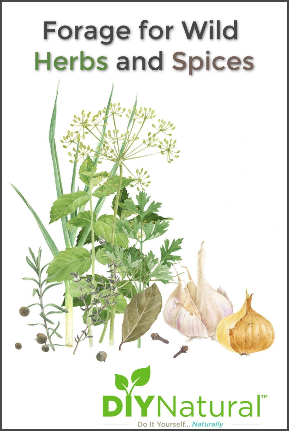 Forage Wild Spices: A List of Herbs and Spices You Can Find And Use