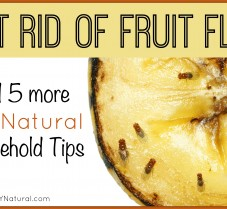 Get Rid of Fruit Flies & Other Natural Home Solutions