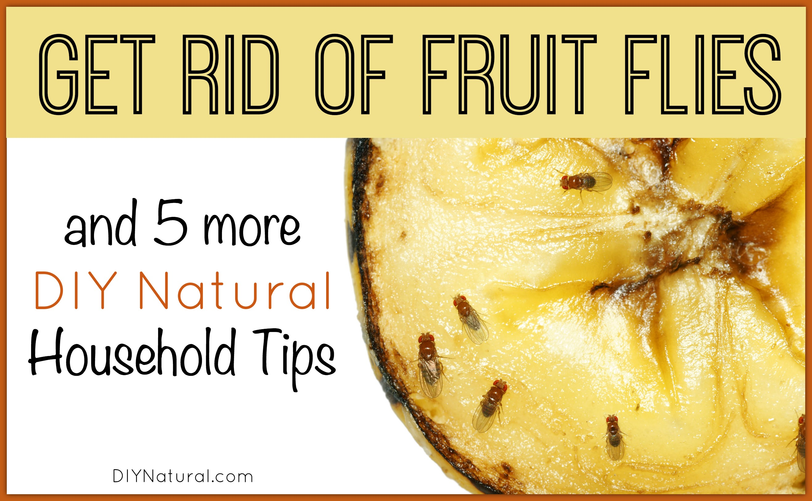 how to get rid of fruit flies and gnats healthy fruit combinations