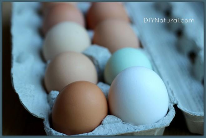 Good Eggs 1