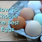 What Really Makes an Egg Good and Healthy?