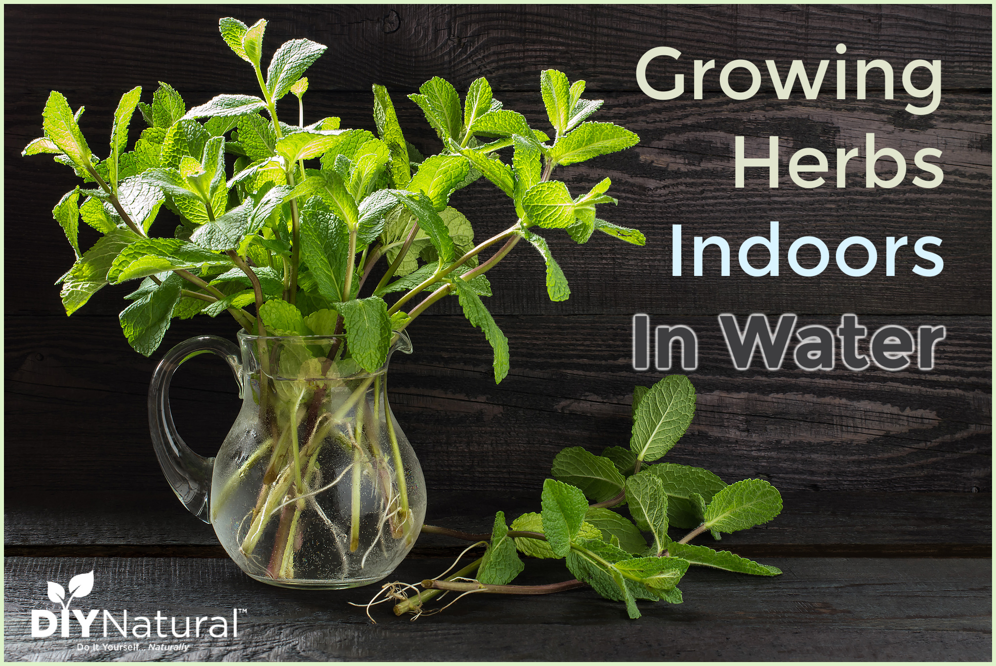 Growing herbs in water indoors for healthy delicious herbs - Herbs that can be grown indoors ...