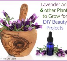Seven Plants You Can Grow for DIY Beauty Projects
