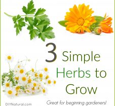 Three Simple Herbs to Grow for Beginning Gardeners
